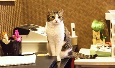 確定申告のよくある質問「レシートでは駄目なんですか?領収書が要りますか?」