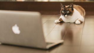 中小企業のホームページは自作すべき?~若手税理士の【WordPressサイトリニューアル】体験記